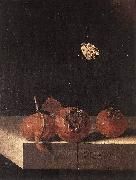COORTE, Adriaen Three Medlars with a Butterfly df oil painting artist