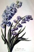 Cornelis van Spaendonck Prints Hyacinth oil painting picture wholesale