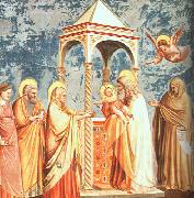 Giotto Scenes from the Life of the Virgin oil painting picture wholesale