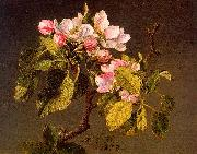 Martin Johnson Heade Apple Blossoms oil painting picture wholesale