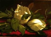 Martin Johnson Heade Magnolia hgh oil painting picture wholesale