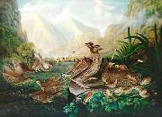 Robert Havell Jr Prints Pinnated Grouse Germany oil painting reproduction