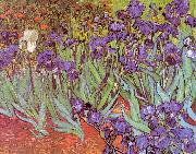 Vincent Van Gogh Irises Germany oil painting reproduction