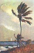 Winslow Homer Palm Tree, Nassau oil painting picture wholesale