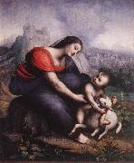 Cesare da Sesto Madonna and Child with the Lamb of God oil painting picture wholesale