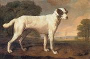George Stubbs Dog oil painting picture wholesale