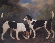 George Stubbs A Couple of Foxhounds oil painting picture wholesale