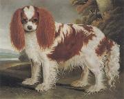 J.L.Clark King Charles Spaniel II oil painting picture wholesale