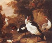 Jakob Bogdani Wild Ducks oil painting picture wholesale