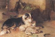 Walter Hunt The Shepherd-s Pet oil painting picture wholesale