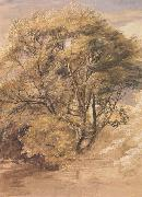 Samuel Palmer The Willow oil painting picture wholesale