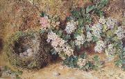 William Henry Hunt,OWS Chaffinch Nest and  May Blossom (mk46) oil painting picture wholesale