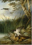 Philip Reinagle Harrier Killing a Bittern oil painting artist