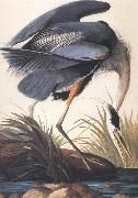 John James Audubon Great Blue Heron oil painting picture wholesale