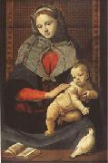Piero di Cosimo The Virgin and Child with a Dove (mk05) oil painting picture wholesale