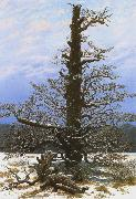 Caspar David Friedrich Oak Tree in the Snow (mk10) oil painting picture wholesale