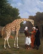 Jacques-Laurent Agasse The Nuian Giraffe (mk25) oil painting picture wholesale