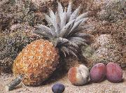 John Sherrin A Pineapple,a Peach and Plums on a mossy Bank (mk37) oil painting artist