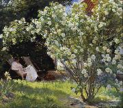 Peder Severin Kroyer Roses Garden in Skagen (nn02) oil painting picture wholesale