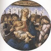 Sandro Botticelli Madonna and Child with eight Angels or Raczinskj Tondo (mk36) oil painting picture wholesale