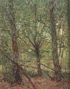 Vincent Van Gogh Trees adn Undergrowth (nn04) oil painting picture wholesale