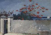Winslow Homer A Wall,Nassau (mk44) oil painting picture wholesale