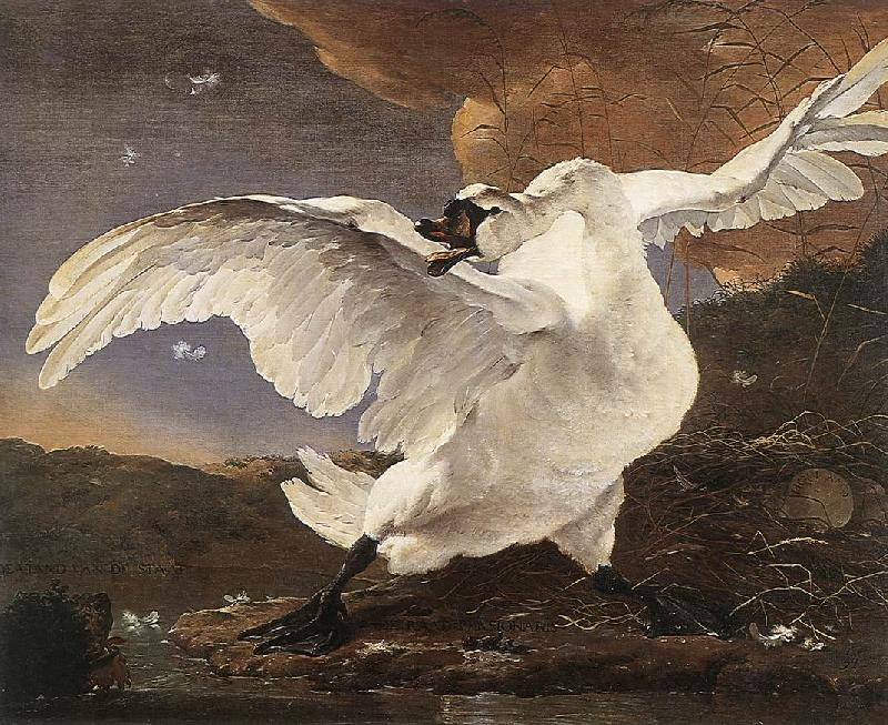 ASSELYN, Jan The Threatened Swan oil painting image