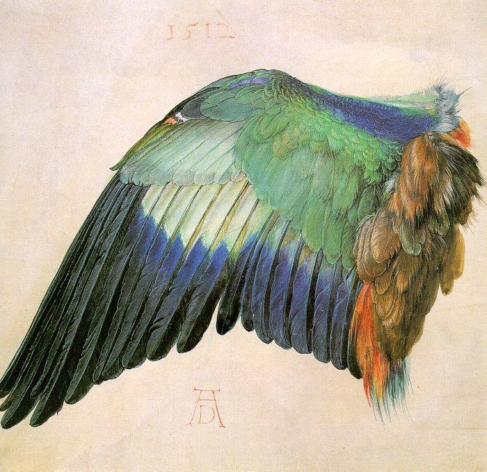 Albrecht Durer Wing of a Roller oil painting image
