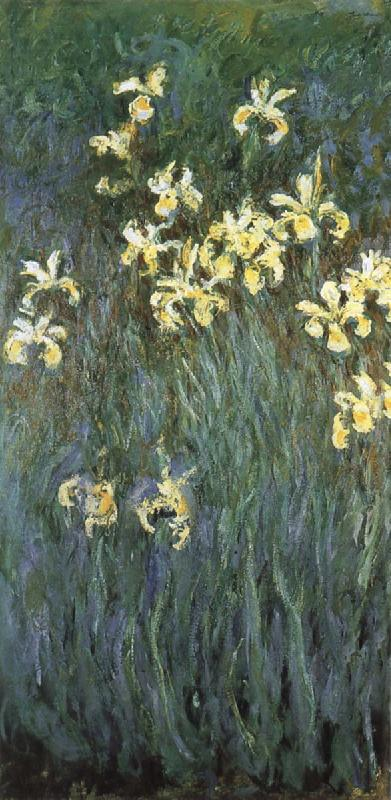 Claude Monet Yellow Irises oil painting picture