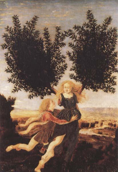 Antonio del Pollaiuolo Apollo and Daphne (mk45) oil painting image