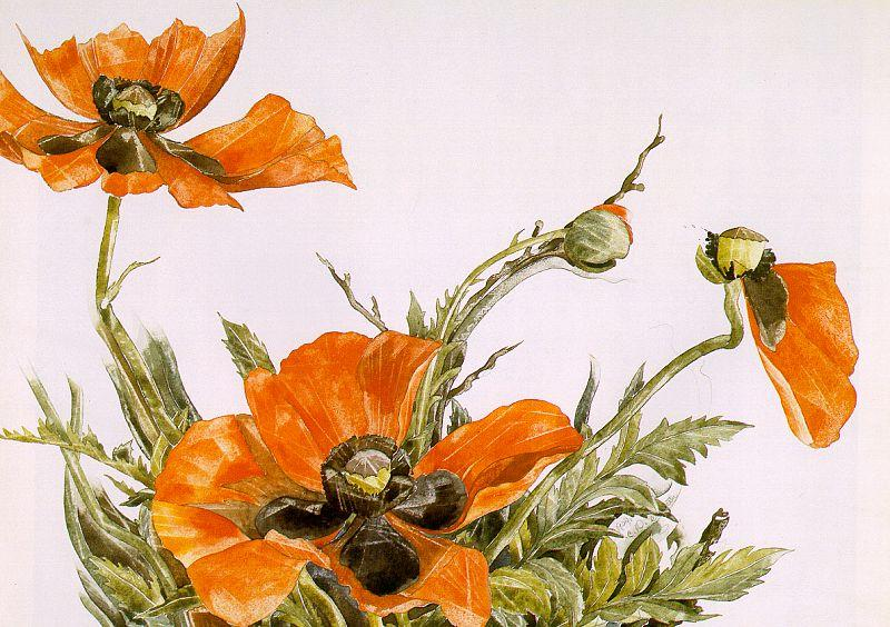 Demuth, Charles Poppies oil painting image