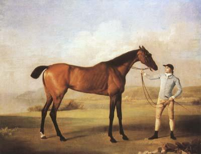 STUBBS, George Molly Longlegs with Jockey (mk08) oil painting image